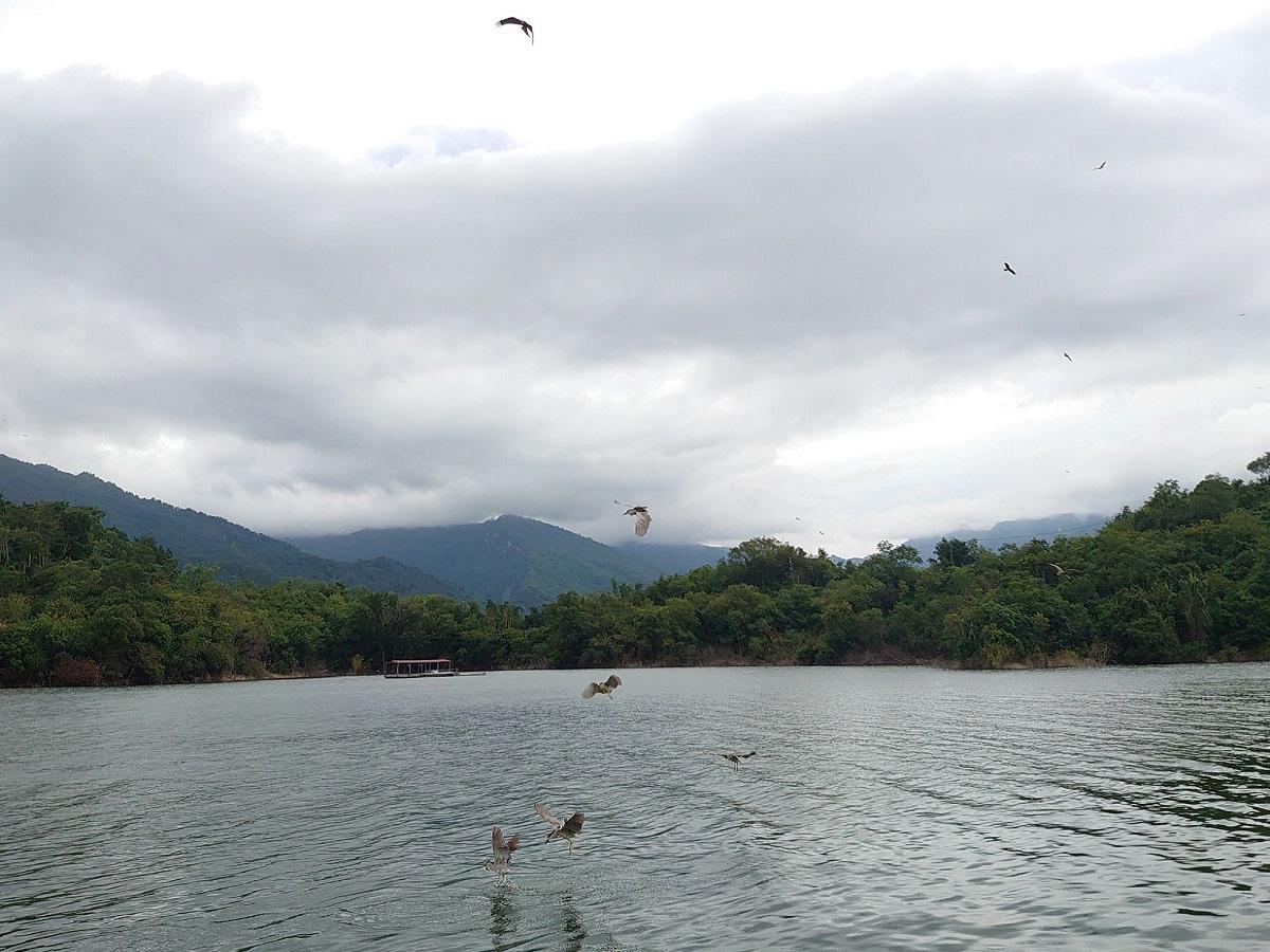 曾文水庫鳥群飛掠水面進食